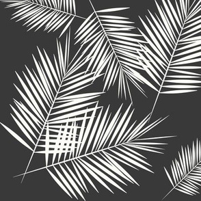 Palm leaves - fern palm tree white on graphite wasgphed black || by sunny afternoon