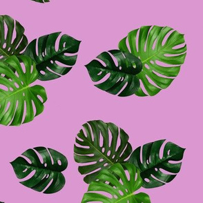Monstera with Pink Background