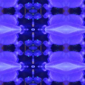 Blue Jelly fish Vancouver Aquarium