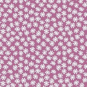 Gerberas in Old Rose - Macro Florals in White