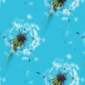 Dandelions Blue