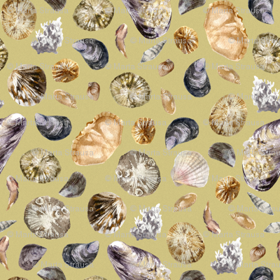 Light seashells