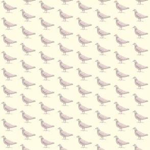 Ivory Pigeon