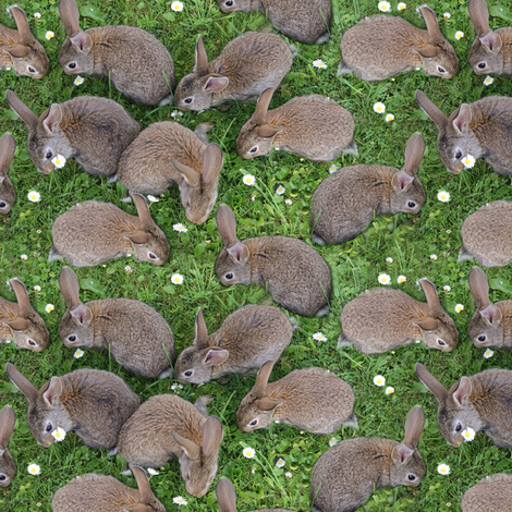 brown bunnys in the grass fabric by stofftoy on Spoonflower - custom fabric