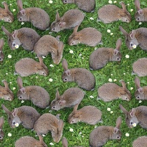 brown bunnys in the grass