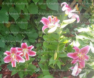 Tiger Lily 5 (Warm tones)