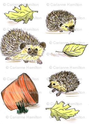 Hedgehogs colour