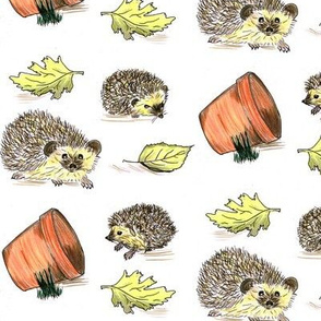 Hedgehogs colour