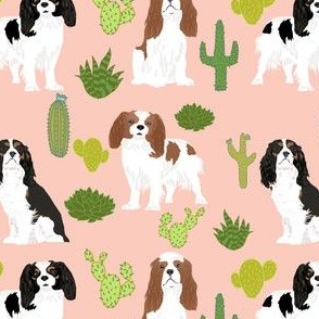 cavalier king charles spaniel blush cactus cacti cute dog dogs sweet pets