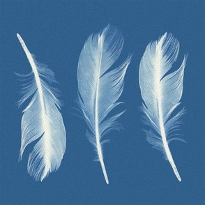 Feathers Cyanotype