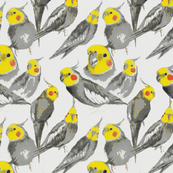 Cockatiel Fabric