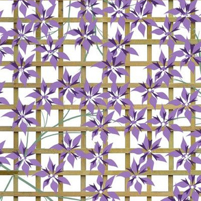 Floral - Purple Clematis on Trellis