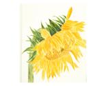 Rrsunflower_pillow_thumb