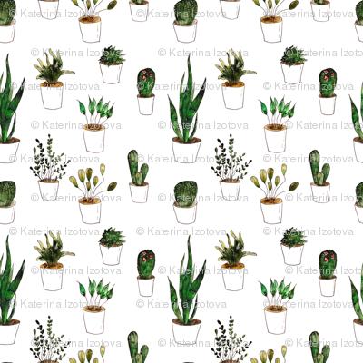 Green plants in white pots