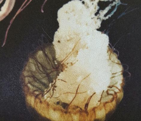 jellyfishdarsoft