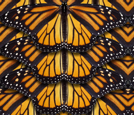 Monarch Butterfly fabric by jenithea on Spoonflower - custom fabric
