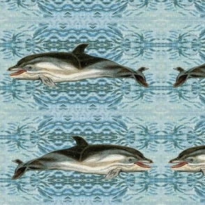Graceful Dolphins