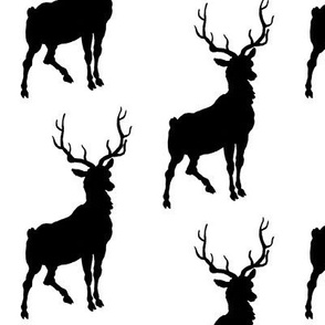 Black and White Deer Stag