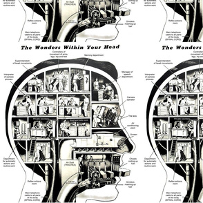 body brains heads cross section biology science spinal chord machines machinery secretary manager cameras lens infographics pop art charts reflex air ducts trachea fuel pipes superintendent air conditioning screen chisels grinders vintage retro kitsch eso