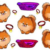 Pomeranian Cute