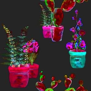 GARDENING NIGHT GLOW red fuchsia aqua fern cactus flowers