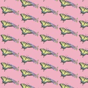 yst_pink_2