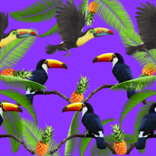 Toucan Madness!