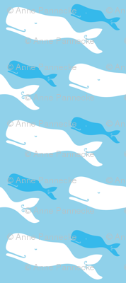 kaikoura whales (New Zealand Sea Collection)