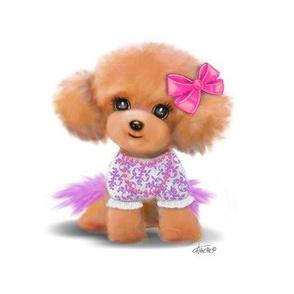 Miniature Poodle Toodles L