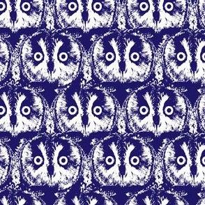 Owl owl owls in blue