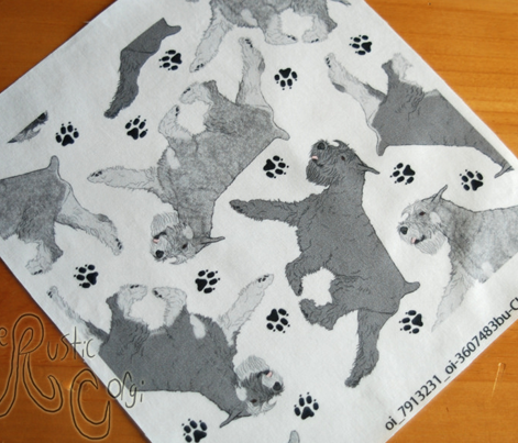 Trotting Standard Schnauzers and paw prints - white
