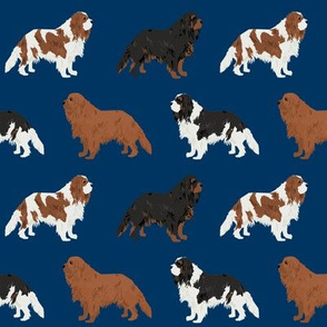 cavalier king charles spaniel navy blue cute dog pet dogs ruby black and tan blemein dog coat fabric