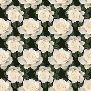 warm-white-rose-lg-double