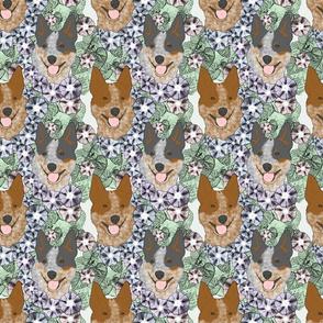 Floral Australian cattle dog portraits