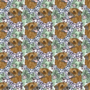 Floral Border terrier portraits