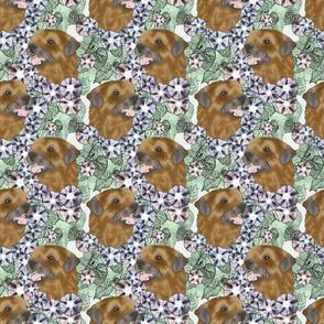 Floral Border terrier portraits