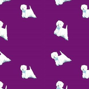 Westies on purple