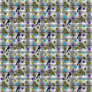 Kiwiautomata grey plaid