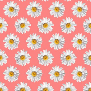 Daisies on Peach Pink