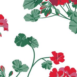 Geraniums_Red