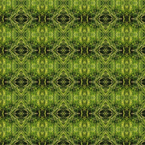 Abtract Grass (yes it can be!)