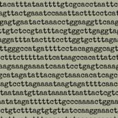 genome-02
