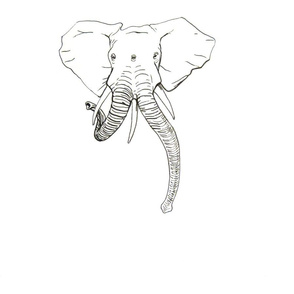 Conjoined Elephant