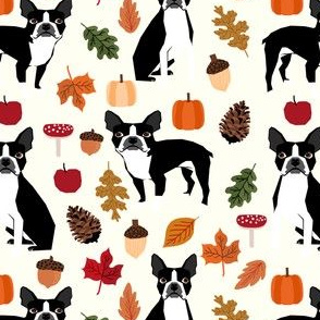 boston terrier autumn dogs dog pet leaves pumpkins pinecones woodland forest