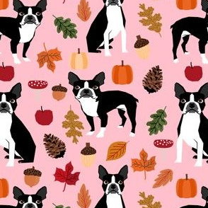 boston terrier pink autumn leaves fall pinecones leaf