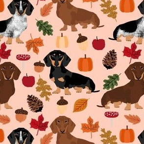 dachshund dog doxie pumpkin autumn leaves leaf pinecones acorns dog breed fabric