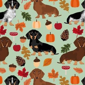 dachshunds dog doxie autumn leaves cute dogs dog design dog breed pumpkins acorns leaf