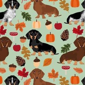 dachshunds dog doxie autumn leaves cute dogs dog design dog breed pumpkins acorns leaf