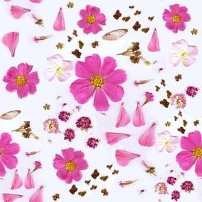 My Garden   Pink