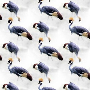 crowned crane on gray background
